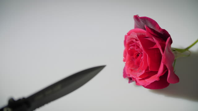 knife and rose flower during the 2020 coronavirus pandemic - knife crime stock videos & royalty-free footage