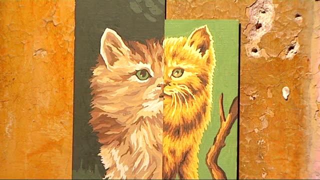 bosanski video cat