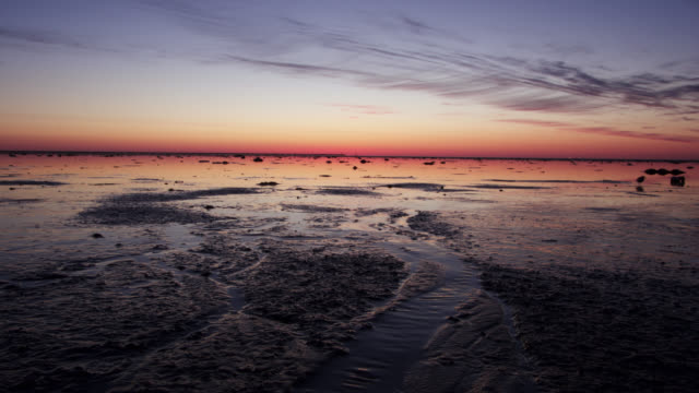 tl knots forage on mud flats at sunrise, delaware - mud flat stock videos & royalty-free footage