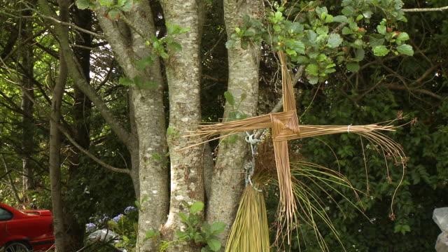 knotted hay on tree - 地衣類点の映像素材/bロール