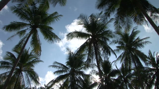 ko samui, thailandbottom view of coconut trees in ko samui thailand - ko samui stock videos & royalty-free footage
