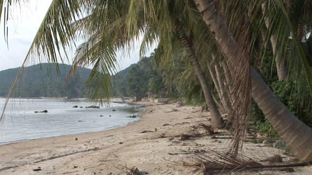 ko samui, thailandview of a beautiful beach in ko samui thailand - solfjäderspalm bildbanksvideor och videomaterial från bakom kulisserna