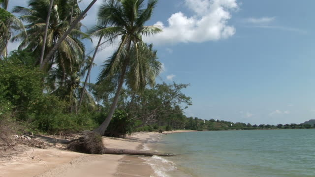 ko samui, thailandview of a tropical beach in ko samui thailand - fan palm tree stock videos & royalty-free footage