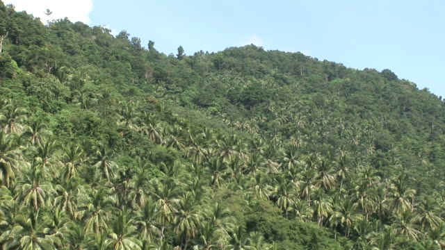 ko samui, thailandview of a tropical forest in ko samui thailand - ko samui stock videos & royalty-free footage