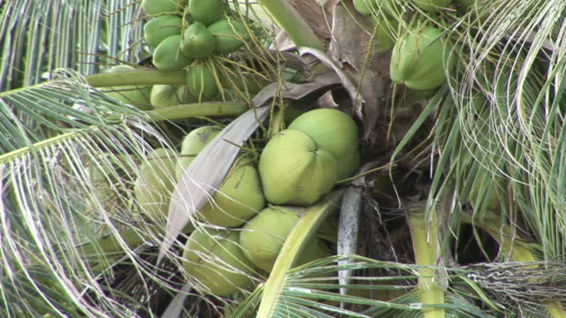 ko samui, thailandview of coconut tree in ko samui thailand - ko samui stock videos & royalty-free footage