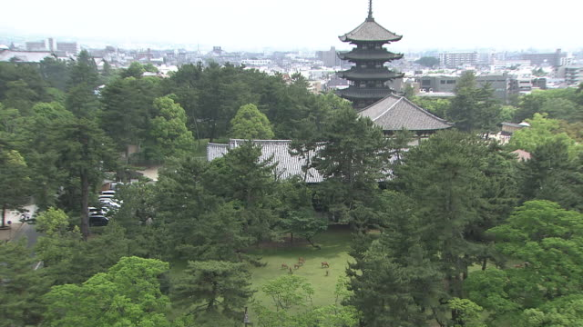 kohfukuji temple and sika deer - pagoda点の映像素材/bロール