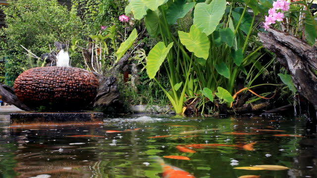 koi fish in pond at backyard - pond stock videos and b-roll footage