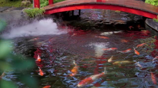 鯉の魚やファンシーカープが日本の池で泳いでいます。 - 整形式庭園点の映像素材/bロール