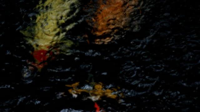 koi fish swim in the water pond and rain falling - aquatic organism stock videos & royalty-free footage