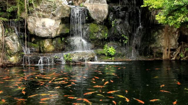 vídeos de stock, filmes e b-roll de koi peixe nadando na água lago e cascata - ajardinado