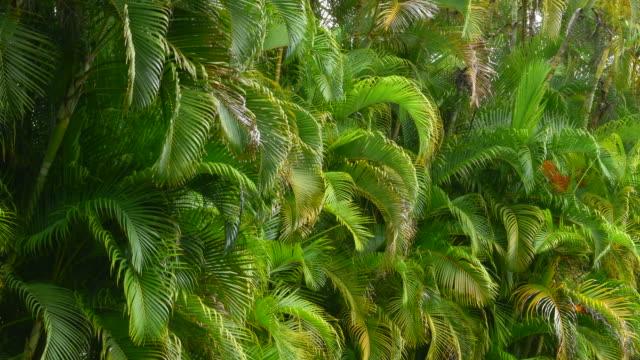 Koloa Kauai Hawaii colorful palms along road in Hawaii Scenic Byway 4K