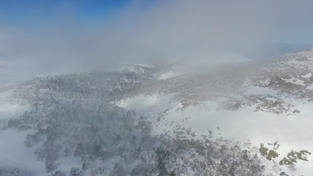 vídeos de stock e filmes b-roll de korean fir trees on hallasan mountain (highest mountain in south korea) covered in snow, jeju island - floco de neve