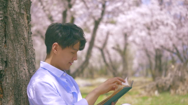 korean man reading a book next to a cherry blossom tree - 年の差カップル点の映像素材/bロール