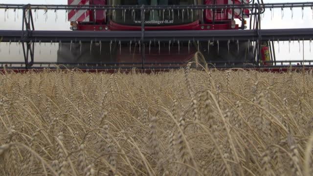 korn zum mehl - harvesting a cornfield in lower austria 02 - lower austria stock videos and b-roll footage