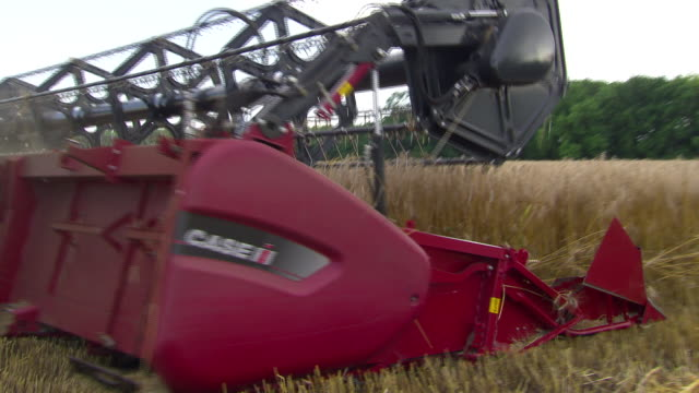 Korn zum Mehl - Harvesting a cornfield in Lower Austria 03
