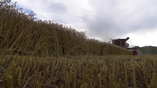 stockvideo's en b-roll-footage met korn zum mehl - harvesting a cornfield in lower austria 04 - lower austria