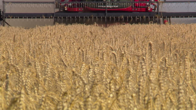 korn zum mehl - harvesting a cornfield in lower austria 06 - flour mill stock videos & royalty-free footage