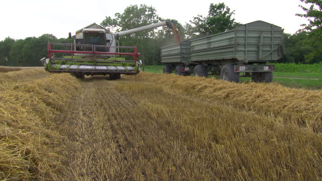 Korn zum Mehl - Machine depositting corn in containers in Lower Austria