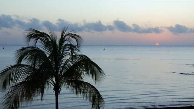 ws tl kourou at sunset / kourou, french guyane, french guyane - french guiana stock videos & royalty-free footage