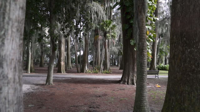 stockvideo's en b-roll-footage met kraft azalea garden. city scenes of downtown orlando during the day in winter. - kraft