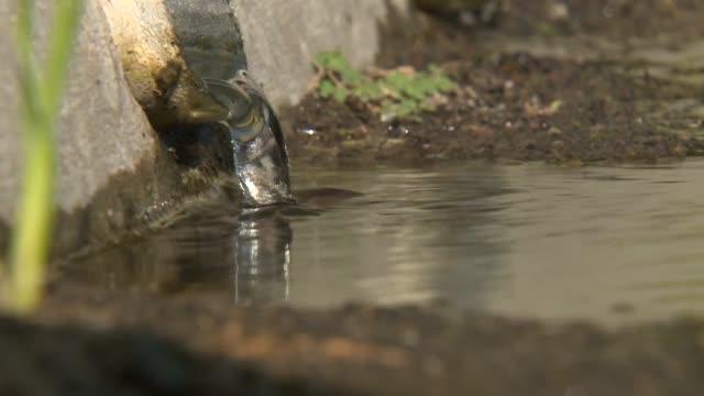 stockvideo's en b-roll-footage met water leak in carlsbad - carlsbad californië