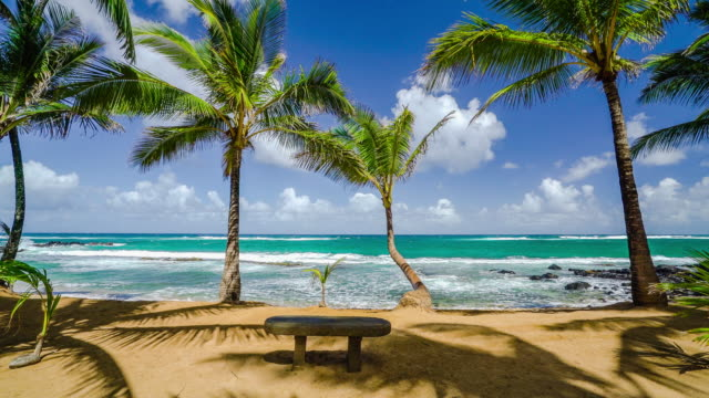 stockvideo's en b-roll-footage met kuau cove beach bench maui hawaii - stilstaande camera