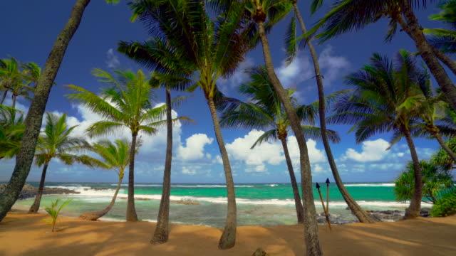 kuau cove beach maui 4k video - fiji stock videos & royalty-free footage