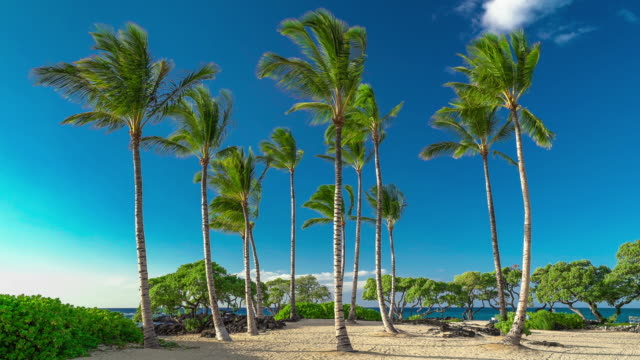 kukio beach kikaua point park palm trees big island hawaii - ヤシの木点の映像素材/bロール