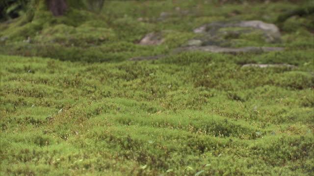 """vídeos y material grabado en eventos de stock de """"kunenan"""" is a name of villa and the garden with the width of 6800 square meters it was built by yataro itami a famous entrepreneur in saga... - musgo flora"""