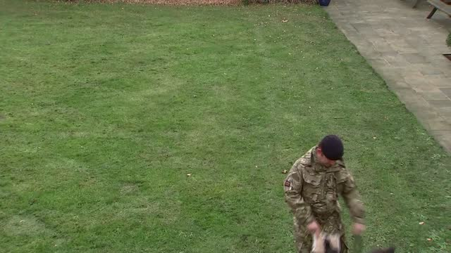 kuno the special forces dog awarded the dickin medal; england: london: woolwich: royal artillery barracks: ext gvs kuno playing with toy and cushion... - cushion stock videos & royalty-free footage
