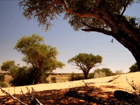 kuruman river reserve, northern cape, south africa - カラハリ砂漠点の映像素材/bロール