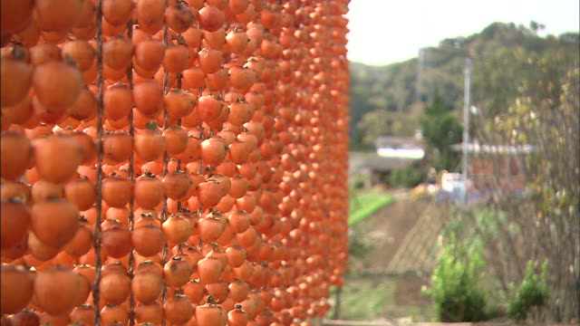 kushi-gakis hang on lines for preserving. - onomichi hiroshima stock videos and b-roll footage