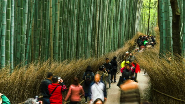 kyoto, japan. november 16, 2017; time lapse tourist walk at the arashiyama bamboo grove, bamboo garden japanese style, kyoto, japan. vdo 4k 30fps - bamboo plant stock videos & royalty-free footage