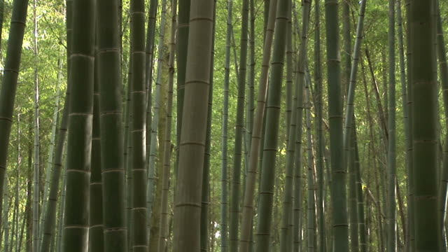 kyoto, japanbamboo forest in kyoto japan - 竹点の映像素材/bロール