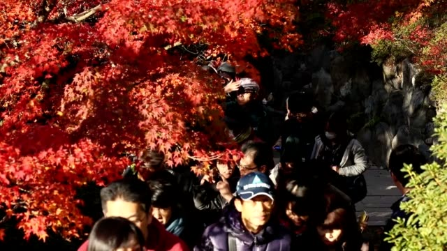 with japan's ancient capital ablaze in fall colors, thousands of visitors are flocking here to marvel at the heavenly spectacle. at tofukuji temple... - autumn leaf color stock videos & royalty-free footage
