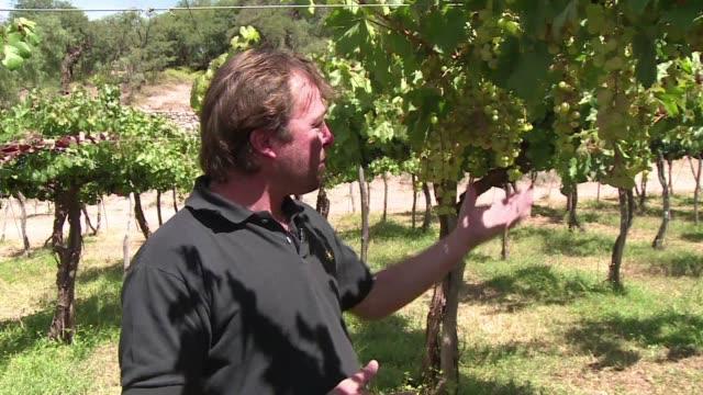 vídeos de stock, filmes e b-roll de la altitud de la region de salta en el norte de argentina es la zona perfecta para el cultivo del torrontes una variedad de vino blanco afrutado cuyo... - vino