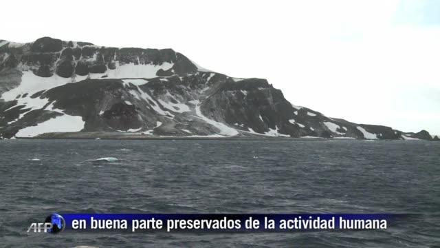 la antartida es el continente mas aislado del planeta un imponente desierto de hielo rodeado de oceano donde los efectos de la intervencion humana... - planeta stock videos & royalty-free footage