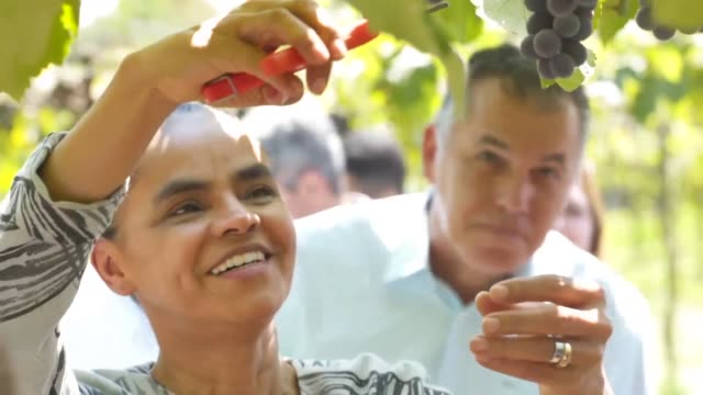 stockvideo's en b-roll-footage met la candidata presidencial marina silva prometio el viernes un brasil sustentable y defendio una agricultura libre de productos quimicos mientras se... - agricultura