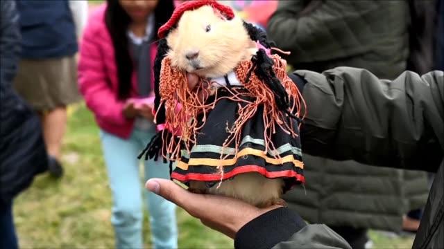 la ciudad colombiana pasto celebro el fin de su tradicional carnaval de negros y blancos con un festival en el que los cuyes son protagonistas muchos... - festival tradicional stock videos & royalty-free footage