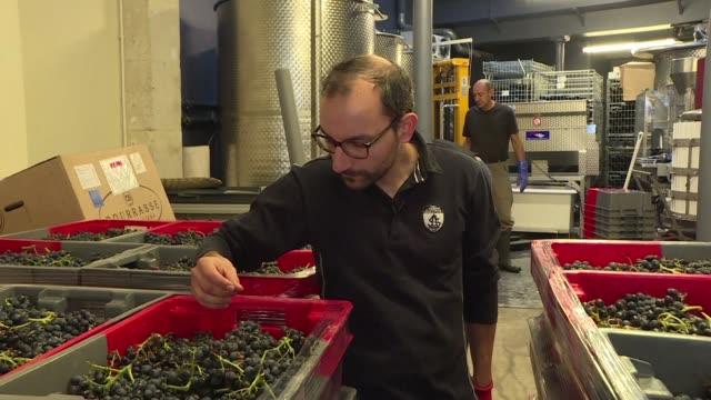 vídeos de stock, filmes e b-roll de la ciudad de la luz la ciudad del amor la ciudad del vino les vignerons parisiens producen la bebida favorita en francia en el corazon mismo de su... - vino