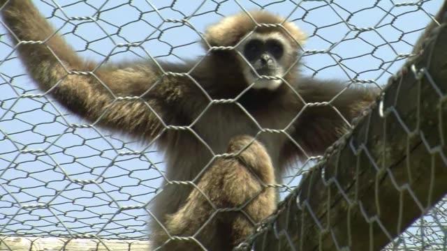 la clinica veterinaria nuestro reino animal alberga a pitones caimanes lemures o tortugas en roma procedentes de operaciones policiales contra... - trafficking stock videos & royalty-free footage