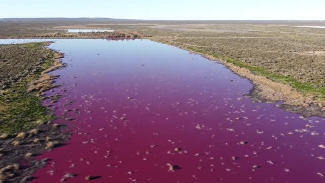 stockvideo's en b-roll-footage met la contaminación de una laguna con un líquido industrial que la tiñó de color rosado intenso en la patagonia , provocó alarma en los vecinos y... - líquido