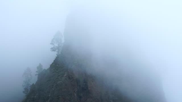 pino canario (pinus canariensis), la cumbrecita, caldera de taburiente national park, la palma, canary islands, spain, europe - kiefernwäldchen stock-videos und b-roll-filmmaterial