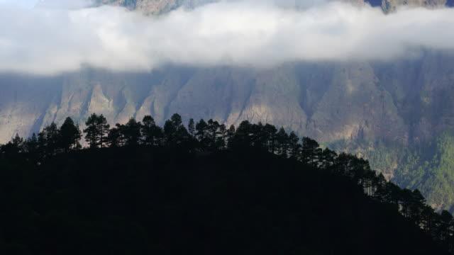 vídeos de stock, filmes e b-roll de pino canario (pinus canariensis), la cumbrecita, caldera de taburiente national park, la palma, canary islands, spain, europe - ilhas do oceano atlântico