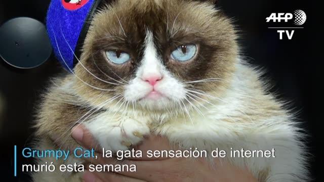 CA: Grumpy Cat la gata sensacion de internet murio a los 7 anos