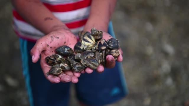 vídeos y material grabado en eventos de stock de la muerte de una gran cantidad de moluscos en su mayoría almejas y mejillones tiene alarmados a los pescadores artesanales que viven de su... - finanzas y economía