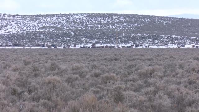 la ocupacion de un parque natural en oregon por unos ganaderos armados es el reflejo de una larga disputa sobre el uso de las tierras en estados... - parque natural stock videos and b-roll footage
