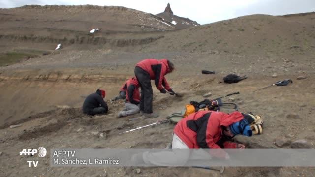 La Patagonia chilena alberga en sus entranas lo que seria uno de los mayores yacimientos de fosiles de dinosaurios donde habrian vivido hace mas de...