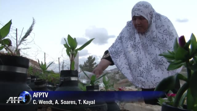 la perdida de su hijo es irreparable pero subheia intenta mitigar su dolor convirtiendo en un jardin memorial las latas de las bombas lacrimogenas... - palestina stock videos and b-roll footage