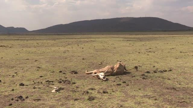 stockvideo's en b-roll-footage met la sequia hace peligrar la agricultura de parte de sudafrica donde presas como molatedi estan al 5% de su capacidad y donde los agricultores... - agricultura